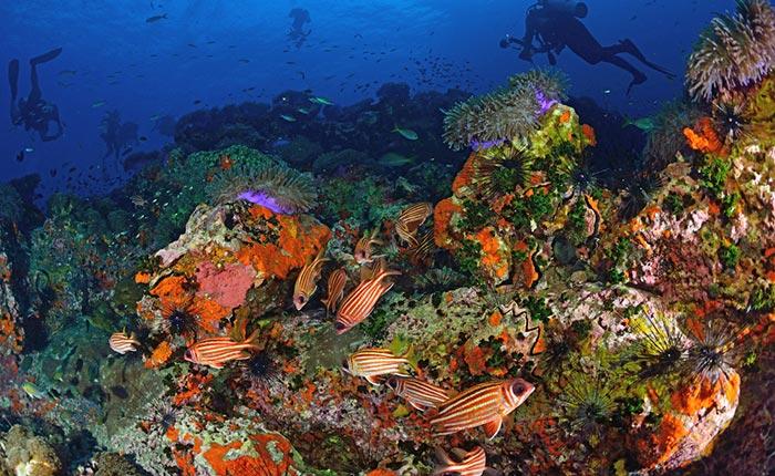 Immersioni Subacquee e Snorkeling