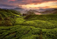 Da Singapore alle Cameron Highlands